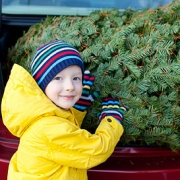 Christmas trees can wreck havoc for allergy sufferers