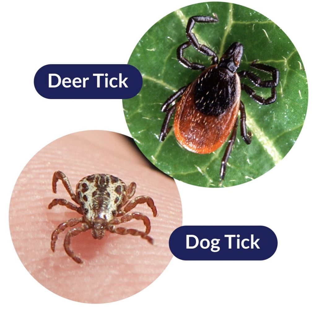 ticks in utah map Do We Have To Worry About Ticks In Utah Utah Valley Pediatrics